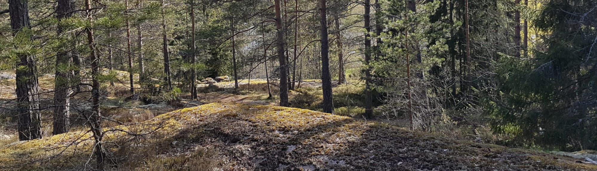 Marjaana Siivola